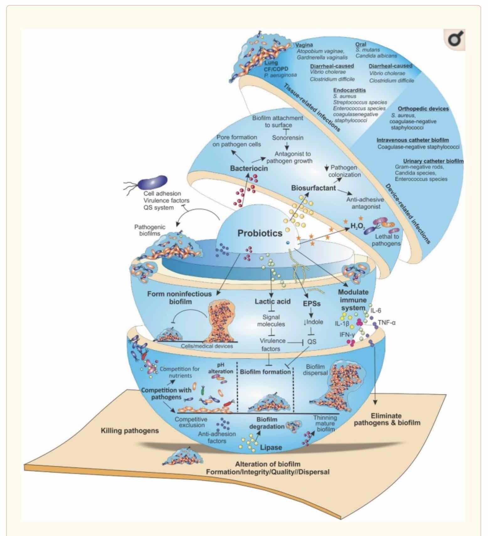 Image - Probiotics Targeting Biofilms