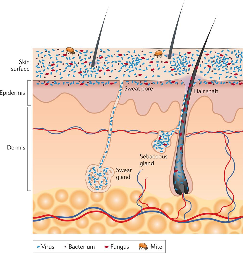 The Skin Biome - Figure 1
