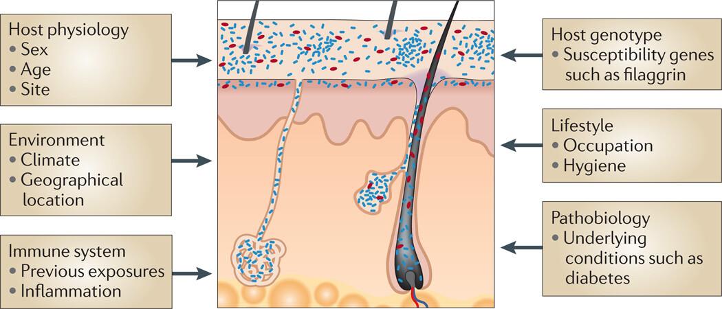 The Skin Biome - Figure 2