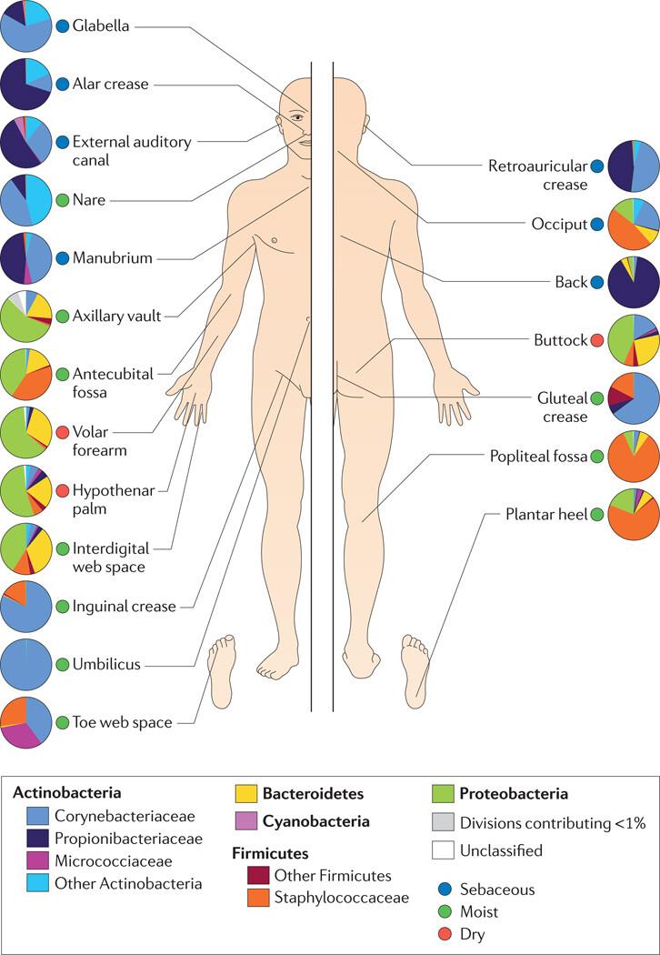 The Skin Biome - Figure 3